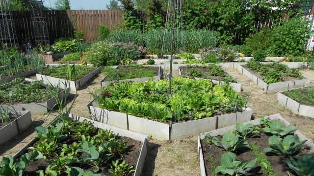 Как сделать красивый дизайн огорода своими руками: 100…